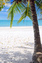 Green tree on white sand beach Stock Images