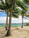 Green tree on a white sand beach malcapuya island coron philippines Stock Images
