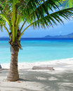 Green tree on a white sand beach malcapuya island coron philippines Stock Photos