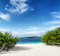 Green tree on white sand beach malcapuya island palawan philippines Royalty Free Stock Photography
