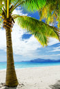 Green tree on white sand beach malcapuya island palawan philippines Stock Images