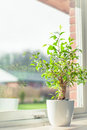 Green tree in a window Royalty Free Stock Photo