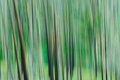 Green trees abstract panning image of a forest in yellowstone national park wyoming Stock Photos