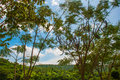 The green trees against the sky. Philippines Royalty Free Stock Photo