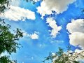 green trees with blue sky and white clouds in summer Royalty Free Stock Photo