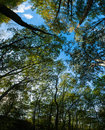 Green Trees Canopy Royalty Free Stock Photo