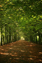 Green trees in row Royalty Free Stock Photos