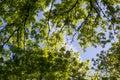 green trees seen from below