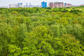 Green trees in summer forest and urban houses Royalty Free Stock Photo