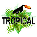 Green triangle with toucan Royalty Free Stock Photo