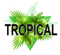 Green tropical banner Royalty Free Stock Photo