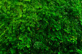 Green tropical decorate plant garden fresh nature background Royalty Free Stock Photo