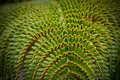 A green tropical fern Royalty Free Stock Photography