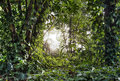 Green tropical forest rain with light shine through Stock Photography
