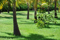 Green tropical garden in resort cuba Stock Image