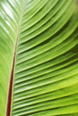 Green Tropical Leaf Detail Stock Photography