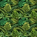 Green tropical leaves seamless pattern. Color monstera and tropic palm leafs, botanical garden floral vector