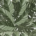 Green tropical leaves seamless pattern. Vector illustration. Exotic banana and monstera leaves background for fabric, art