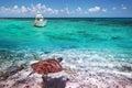 Green turtle underwater in Caribbean Sea Royalty Free Stock Photo