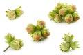 Green unripe hazelnuts on white background Royalty Free Stock Image