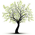 Green vector tree, white background Royalty Free Stock Photography