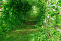 Green vegetable plant tunnel and fence Royalty Free Stock Image