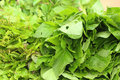 Green vegetables in the basket at the market Royalty Free Stock Photo