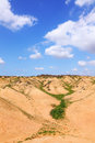 Green vegetation bottom dry small river desert negev israel Stock Photo