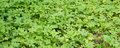 Green vegetation by a forest Royalty Free Stock Photo