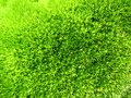 Green vegetative background image of and texture Stock Images