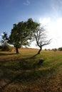 Green versus dead trees