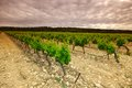 Green vineyard orange sky over Royalty Free Stock Image