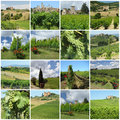 Green vineyards in tuscan countryside Royalty Free Stock Photo