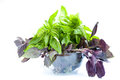 Green and violet basil in bowl Stock Images
