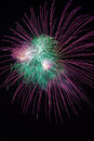 Green and violet colorful fireworks in black background,artistic fireworks. Royalty Free Stock Photo