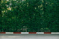 Green wall background garden street Royalty Free Stock Images