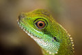 Green water dragon eye close up detail of a Stock Photo