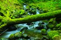Green water and moss. Royalty Free Stock Photo