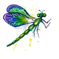Green watercolor dragonfly vector greeting background with beautiful flying Royalty Free Stock Images