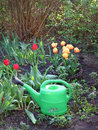 Green Watering Flower Beds Wit...
