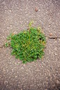 Green weed on asphalt Stock Photography
