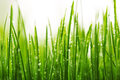 Green wet grass with dew on a blades shallow dof Royalty Free Stock Photos