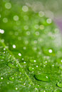 Green wet leaf Stock Images