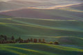 green wheat hill from palouse Royalty Free Stock Photo