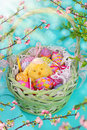 Green wicker basket with easter eggs and chicken colorful funny Stock Photo