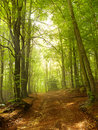 Green and wild nature, forest in Catalonia (Spain) Stock Photo