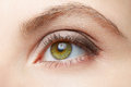 Green woman eye beauty with light brown make up Royalty Free Stock Photo