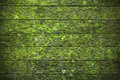 Green Wood Moss Lichen Background Royalty Free Stock Photo