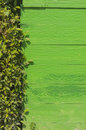 Green wood and Green leaf texture