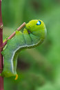 Green worm creep the on branch select focus Stock Photography